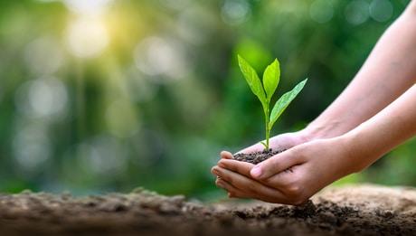 Licht als Bedeutungsfaktor für die Pflanzen