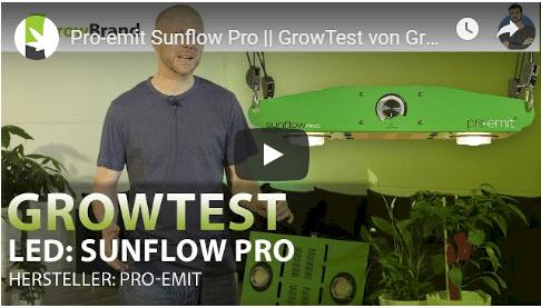 Pro-Emit SunflowPro - Growbrand_2019-08-22_22-05-26