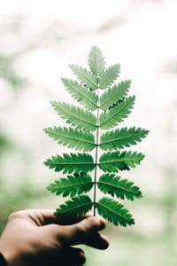 Pflanzen brauchen Licht zum Wachsen