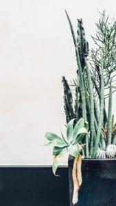 Wie wichtig ist der richtige Boden bei Pflanzen?
