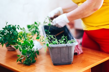 Pflanztisch selber bauen