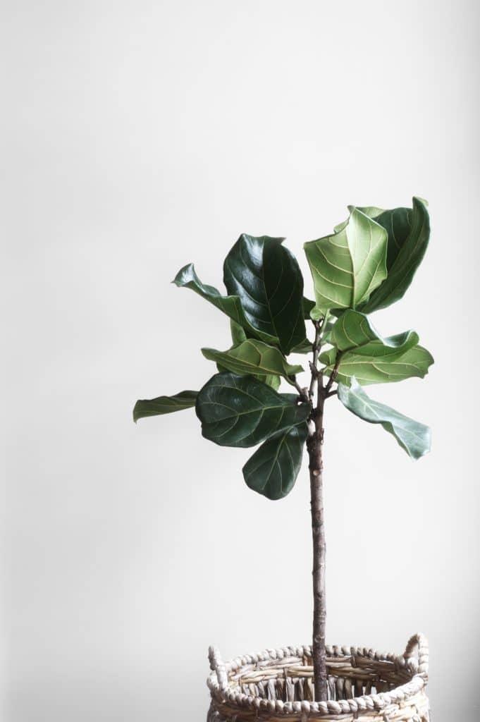 Brauchen Pflanzen UV-Licht?