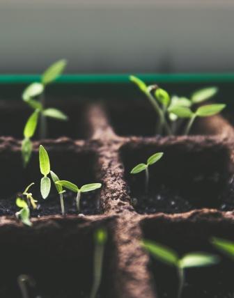 Leuchtstoffröhren für Pflanzen als Stecklinge oder zur Überwinterung