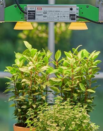 Bestes Wachstum mit Pflanzenlicht