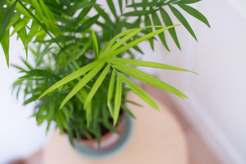 Palmen überwintern