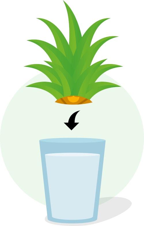Schritt 3: Strunk in ein mit Wasser gefülltes Gefäß stellen