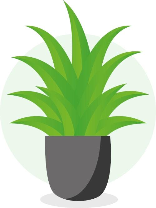 Substrat pflanzen
