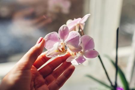 Standort für Orchidee wählen