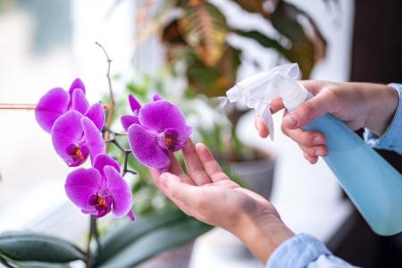 richtige Pflege der Blüten