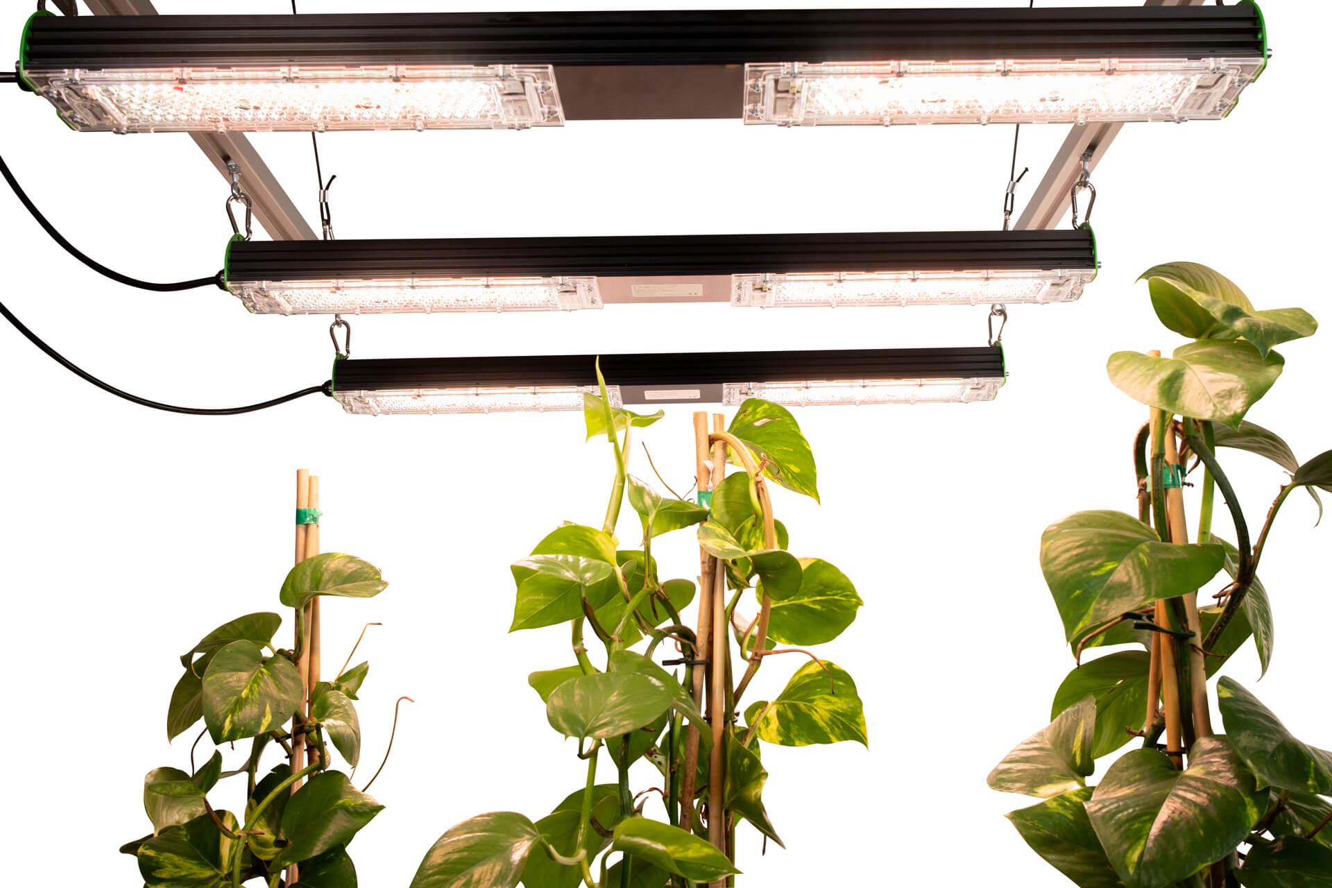 sunbar-360-b-pro-emit-bottum-up-on-plants